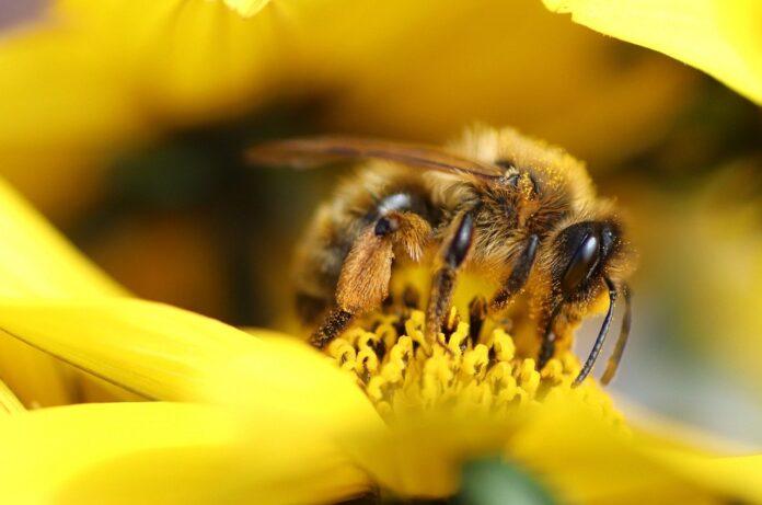 Giornata mondiale delle api, da SIOOT ozono in aiuto degli impollinatori