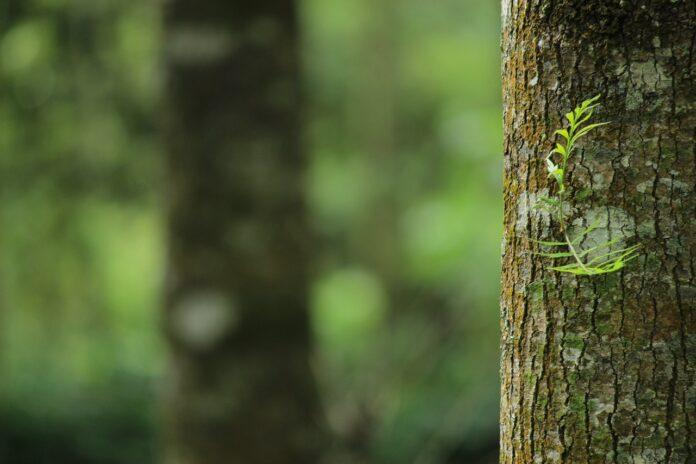Riforestazione dell'Isola La Certosa, sinergia virtuosa da più parti