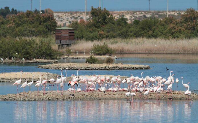 Festa delle oasi e delle riserve Lipu, ritorno alla natura