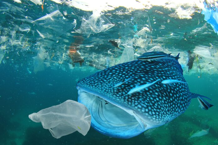 La lotta al Covid frena quella all'inquinamento da plastica