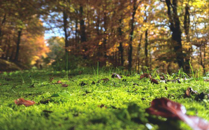 """CREA presenta il """"Report Progetti forestali di sostenibilità 2020"""""""