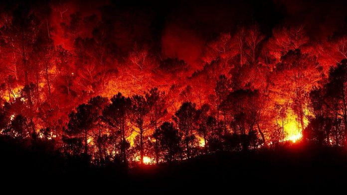Incendi e cambiamenti climatici, da PEFC cinque comportamenti per proteggere le foreste italiane