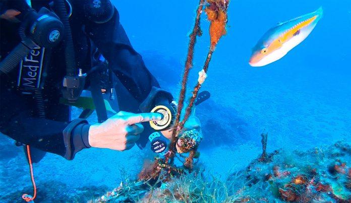 MedFever, una rete di termometri per misurare la febbre del Mediterraneo