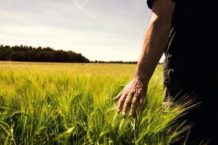 Continental presenta il suo Osservatorio sul settore agricolo in Italia in pandemia