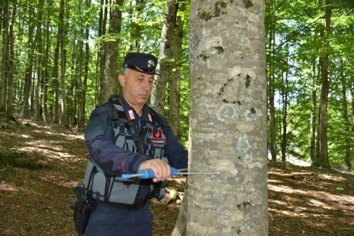 Le foreste italiane, aumentano superficie e assorbimento di anidride carbonica